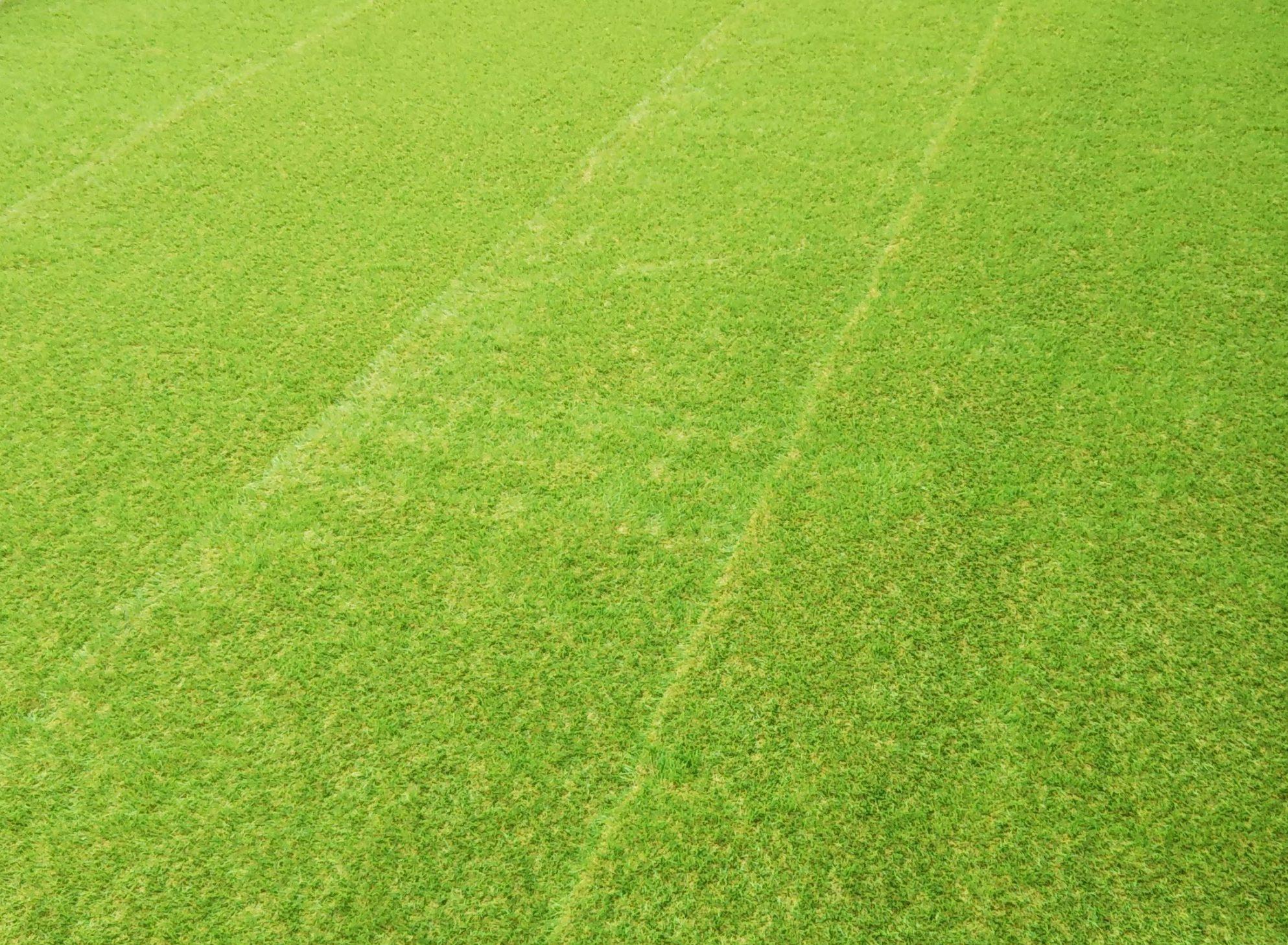 【庭DIY】人工芝の敷き方を経験談から解説。初心者が施工した出来栄え